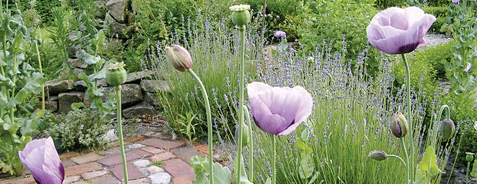Natur_und_Garten