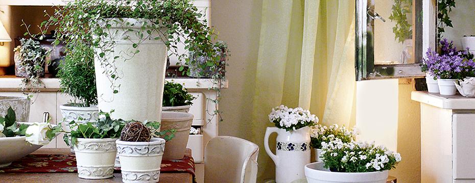 Rolfs Blumen Shop