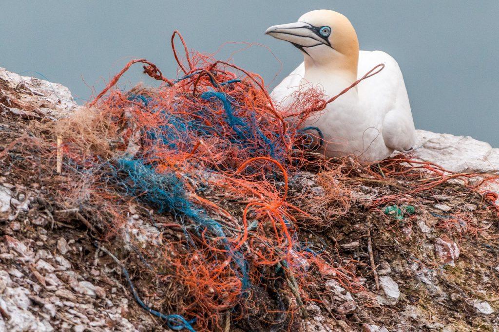 Vogel im Plastiknest