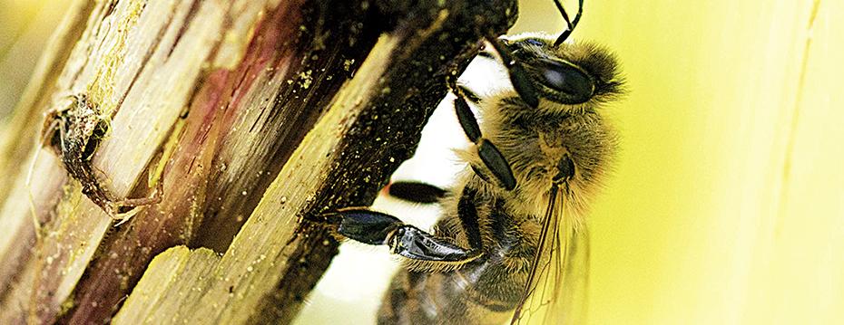 Bee Rent_web