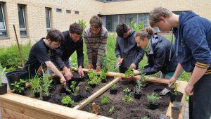Gemüse pflanzen in der Berufsbildenden Schule 3.