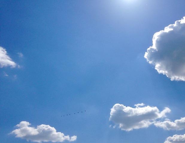 Himmel, Wolken, Vögel.