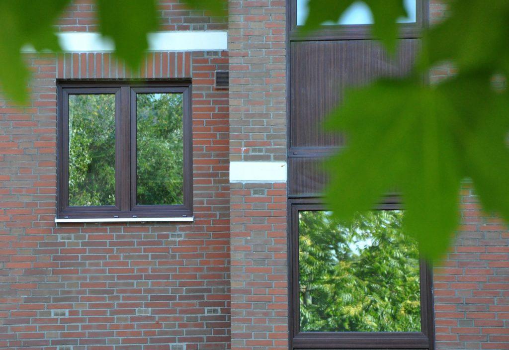 Vogelschlag – Bäume spiegeln sich in Fenstern.