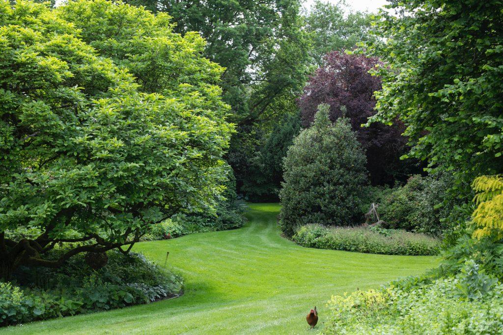 Ein Huhn im Bauerngarten.