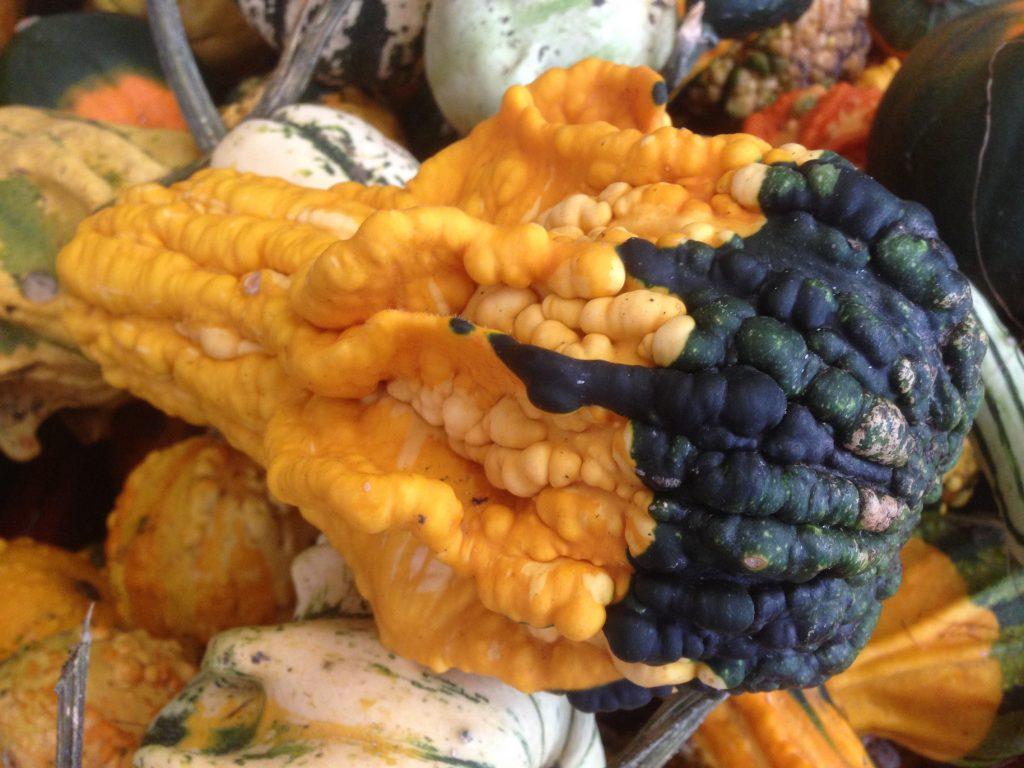 Ein länglicher, orange-grüner Kürbis,