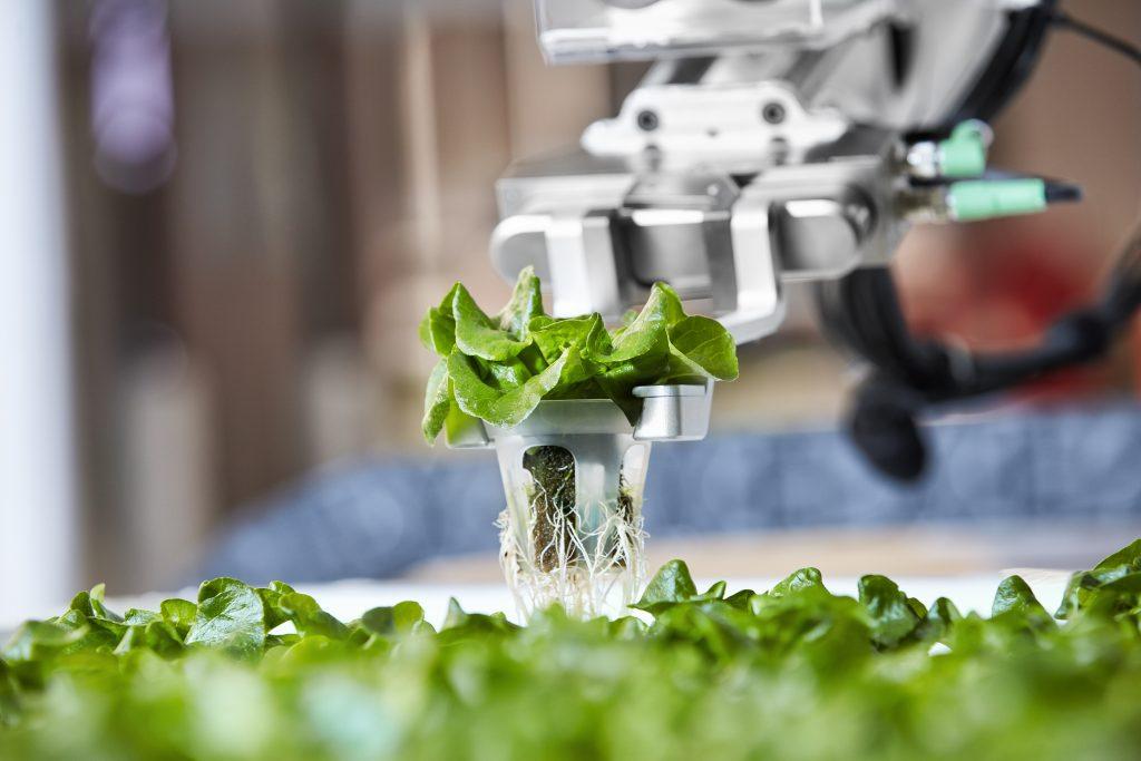 Ein Roboterarm von Iron Ox pflanzt einen Setzling um.